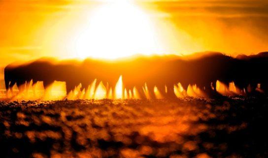 Żubry. Światło i cień – wystawa fotografii Michała Kościa
