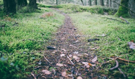 Cztery Pory Roku w Krainie Puszczy i Żubra – rajd nordic walking